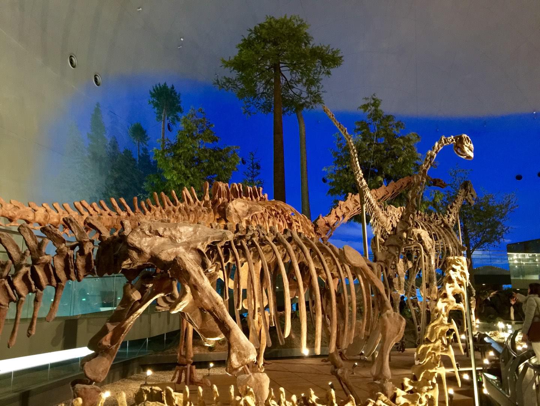 生きてる様な躍動感に感動福井県立恐竜博物館に行ってきました