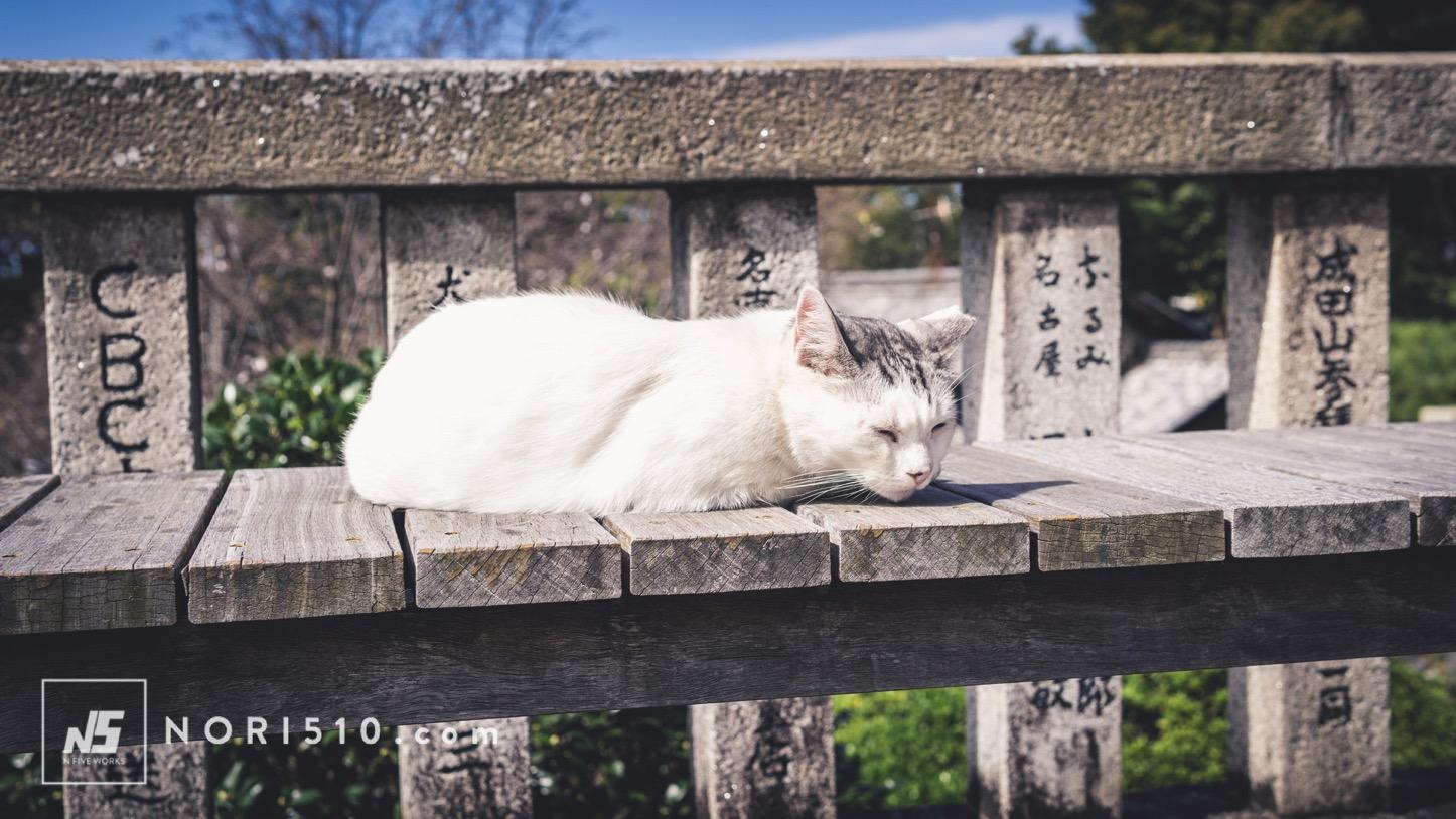 成田山のネコ