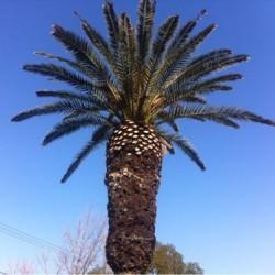 マジでかい大阪の公園にはどでかいパイナップルがなってるぞ